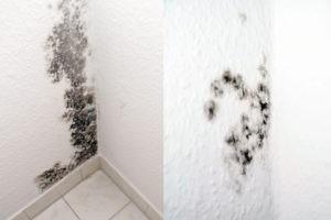 עובש על הקירות עקב רטיבות
